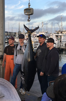 c5070de3 Yesterday, the Liberty full day trip caught two cows. 249 and 223 The 249  was hooked on a rent rod with 50 lb test. The 223 was hooked on 80 lb test.
