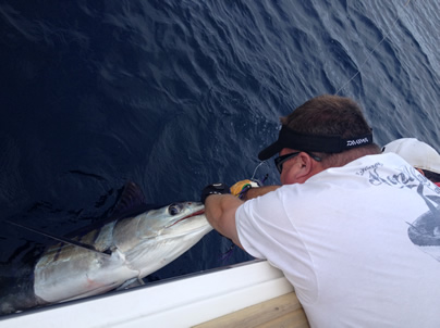 1st marlin released congrats to todd p billy and crew for Jds fish report